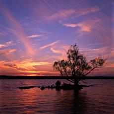 600px-Rivertree_1_md.jpg